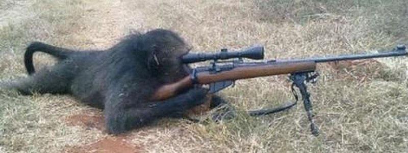 chimp ak47